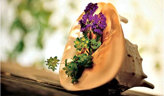 цветок в ракушке