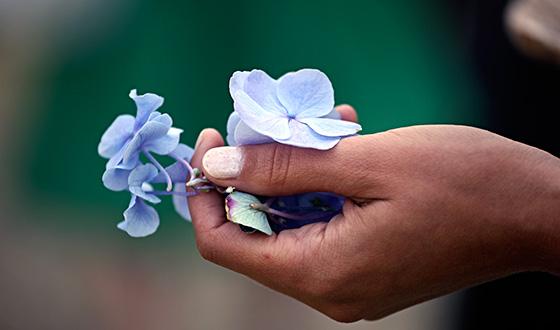 голубые цветы в руках