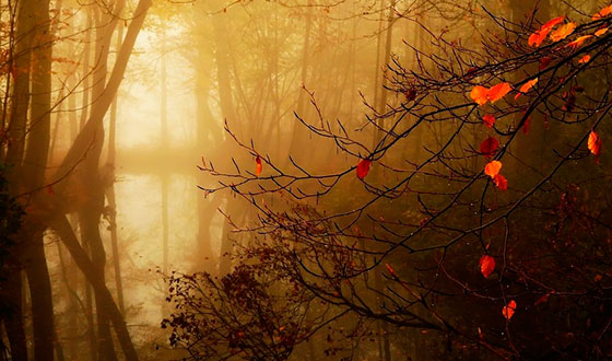 на восходе в лесу